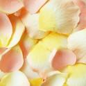 Zakje luxe oranje creme stoffen rozenblaadjes