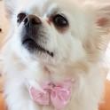 Luxe en super comfortabele wit met roze dasstrik voor honden