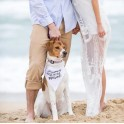 Honden bandana met de tekst My Humans are getting Married
