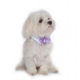 Luxe en super comfortabele wit met lila dasstrik voor honden