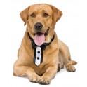 Luxe zwart met witte dasstrik voor honden